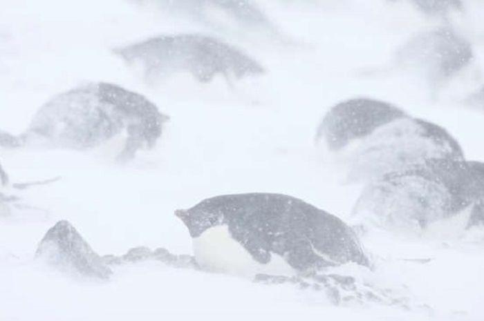 Kuburan Massal Penguin