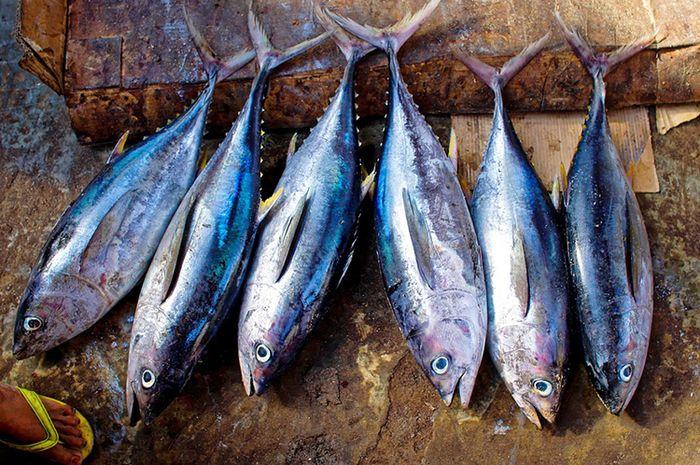 Kesalahan memilih ikan dapat menyebabkan penyakit autoimun