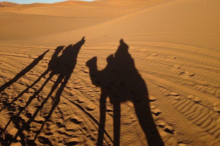 Ilustrasi Gurun Sahara - Darkness Camel Morocco Sahara Desert