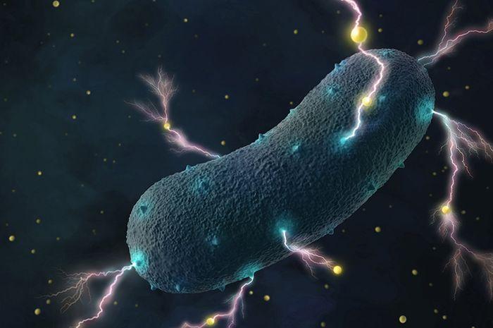Bakteri dalam usus bisa menghasilkan listrik.