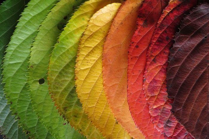 Ilustrasi warna-warni daun di musim gugur