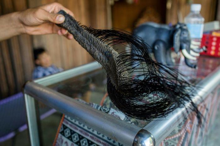 Ekor gajah dengan bulu-bulu kasar yang dijual oleh para pedagang di Vietnam.