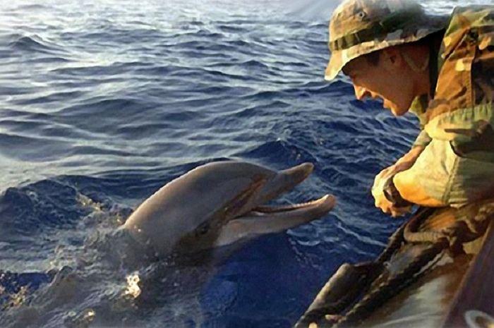 Lumba-lumba membantu angkatan laut