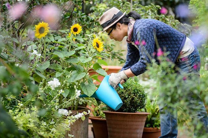 Cara mudah memanfaatkan barang yang ada di rumah untuk berkebun
