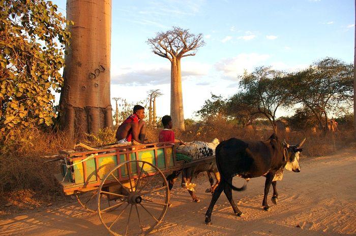 Penduduk Madagascar