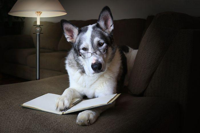 Banyak orang menganggap anjing sebagai hewan yang cerdas.