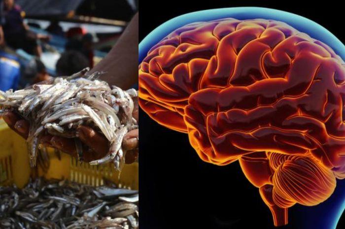Ikan Teri meningkatkan kecerdasan otak