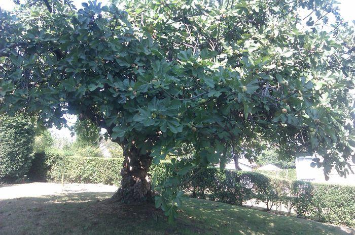 Benarkah pohon dapat tumbuh dari biji di perut orang mati
