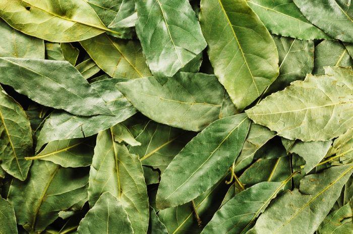Manfaat kesehatan tak terduga dari daun salam