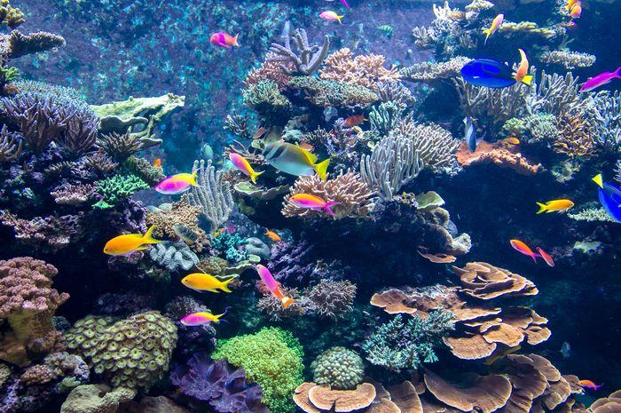 ilustrasi terumbu karang