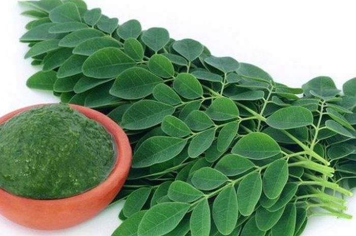 Manfaat daun kelor diakui oleh peneliti-peneliti luar negeri.
