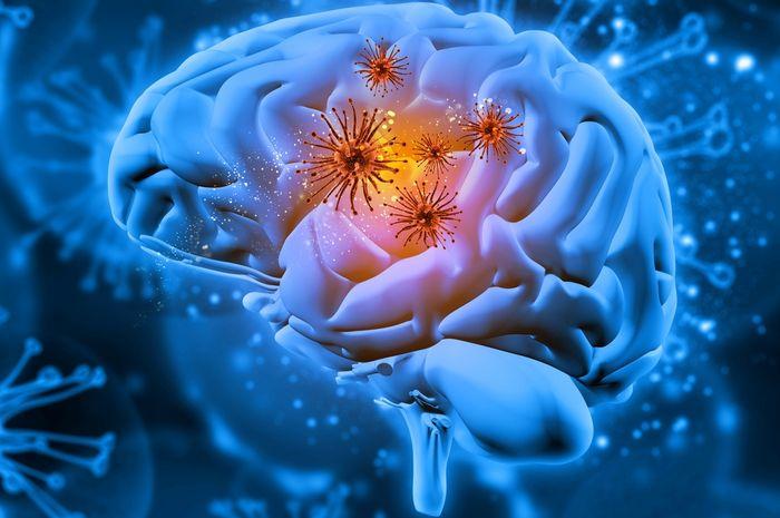 Ilustrasi bakteri di otak manusia.