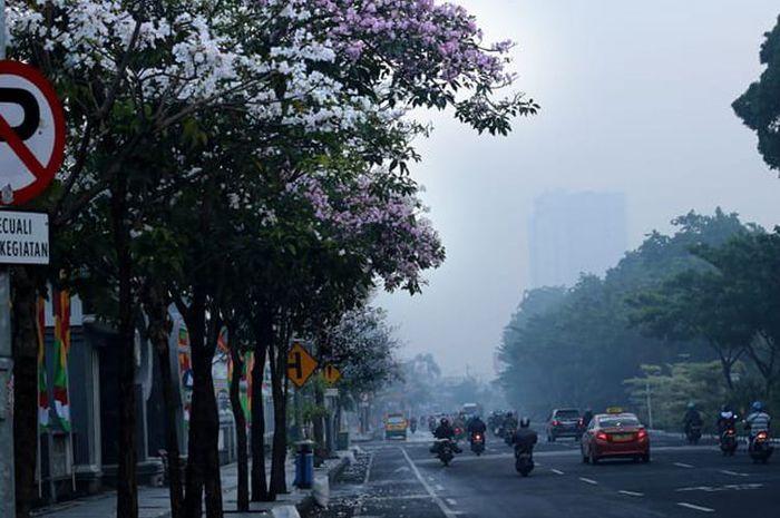 Bunga Tabebuya hiasi Kota Surabaya