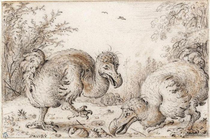 Penggambaran burung Dodo di tahun 1600-an