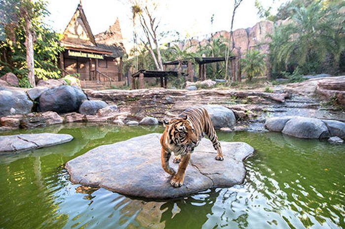 Menjelajah Batu Secret Zoo Kebun Binatang Terbaik Di Indonesia Semua Halaman Intisari