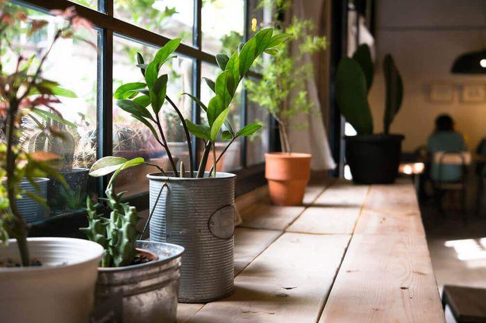 Miliki tanaman di dalam rumah