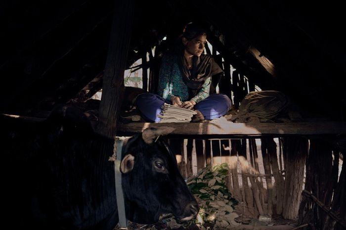 Tradisi Chaupadi membuat perempuan ini terpaksa tinggal bersama hewan ternak saat menstruasi