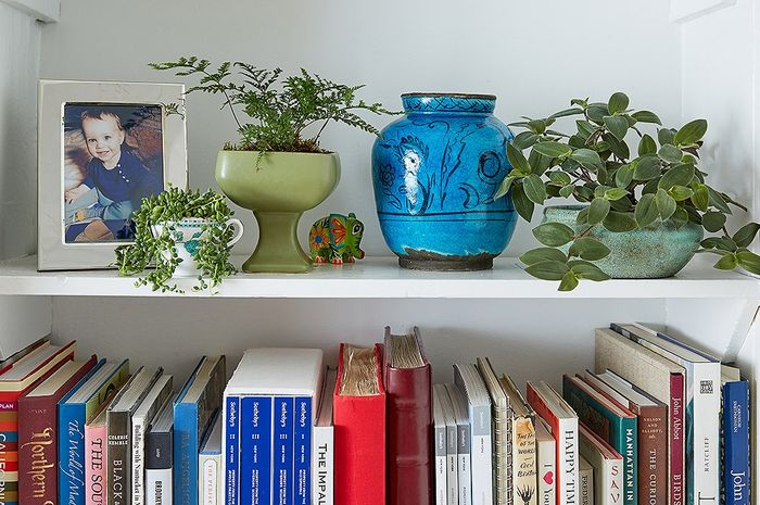 Tempatkan beberapa tanaman di rak buku