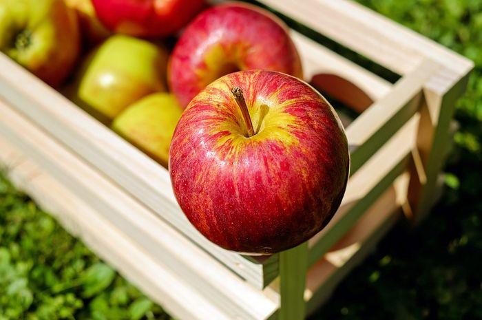 Moms, mulai sekarang simpan apel di dalam kulkas karena alasan ini