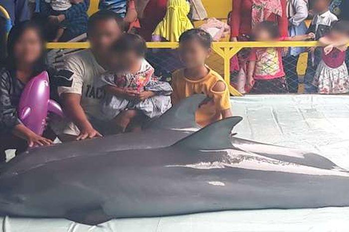 Lumba-lumba dipaksa naik ke daratan agar para pengunjung bisa berfoto bersama mereka.