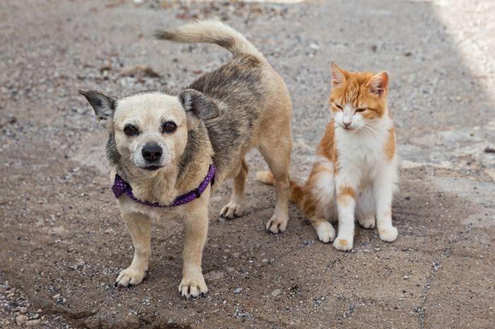 Ilustrasi kucing dan anjing