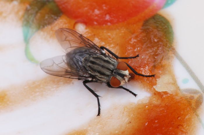 Lalat hinggap ke tumpahan sambal