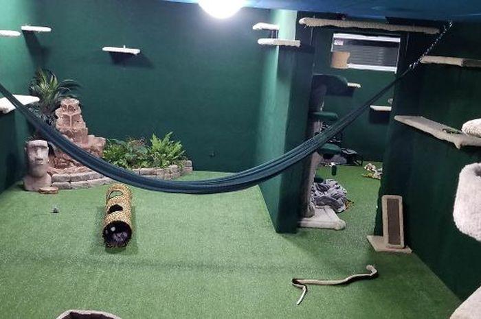 Rumah kucing di basement yang dibangun Hilton dan teman-temannya