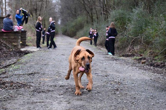 Anjing yang dipanggil dengan nama Ludivine itu belakangan ini menjadi perhatian publik karena mengikuti lomba lari maraton di Kanada.