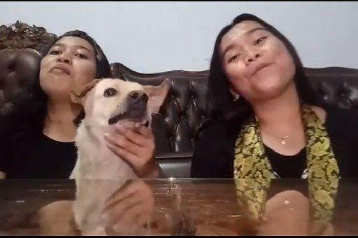 Viral! Seorang Wanita di Medan Nyaris Digigit Anjingnya Saat Berduet Menyanyikan Lagu Sayur Kol, Simak Videonya