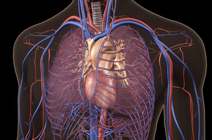 6800 Gambar Organ Tubuh Hewan Vertebrata Gratis Terbaik