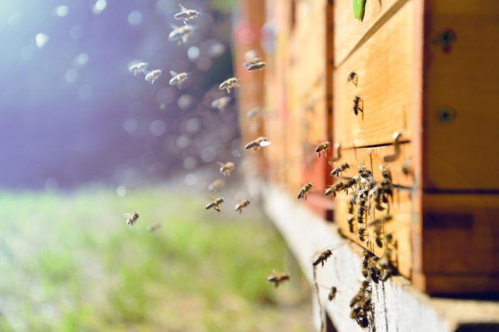 Serangga membantu penyerbukan tanaman.