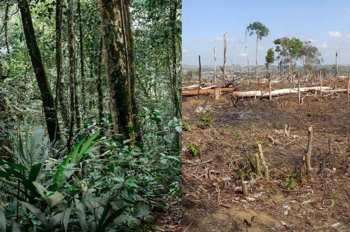 Perbedaan kondisi hutan di Bumi dalam sepuluh tahun.