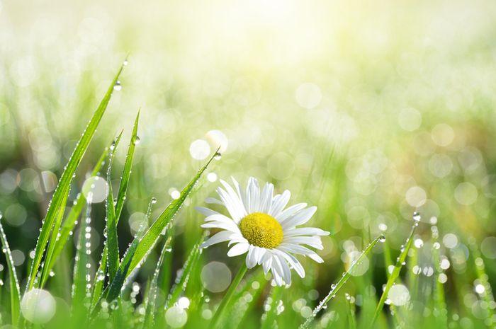 Petrichor sering disebut sebagai aroma alami setelah hujan.