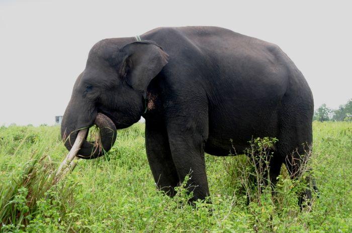 83 Gambar Kaki Hewan Gajah Terbaik