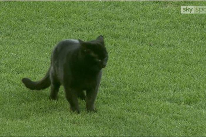 Seekor kucing menyusup masuk lapangan dalam laga Everton kontra Wolverhampton pada Sabtu (2/2/2019).
