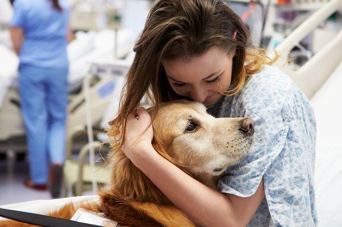 Terapi dengan hewan peliharaan untuk mengobati kanker.