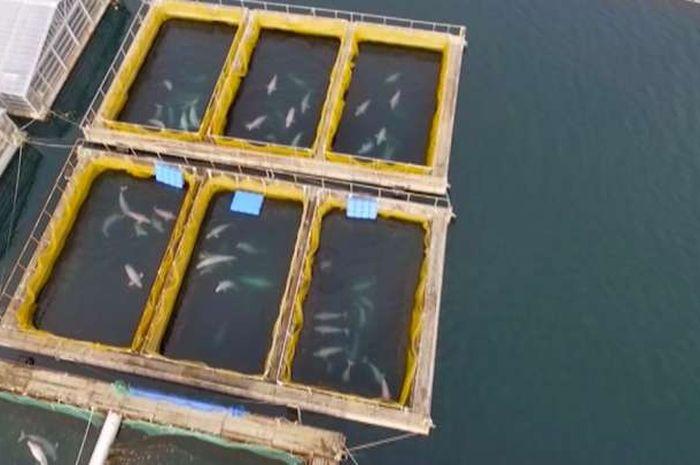 Penjara paus yang terlihat di Rusia.