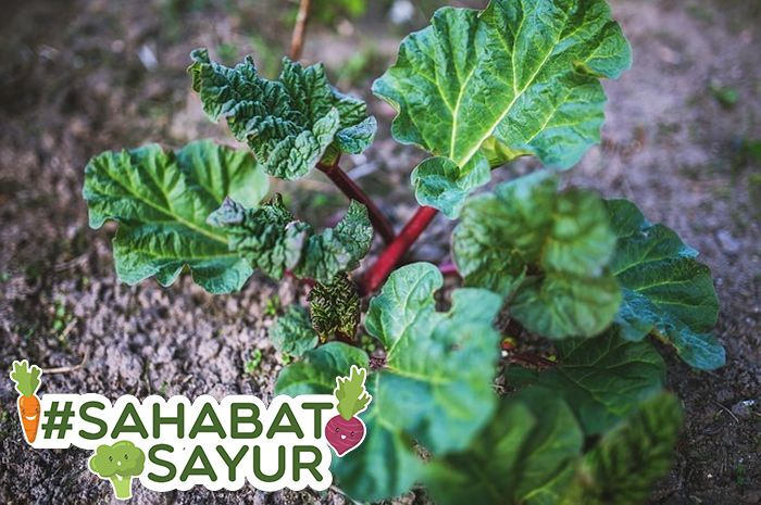 Ini dia sayur yang mampu cegah sembelit hingga kanker yang wajib diketahui #SahabatSayur