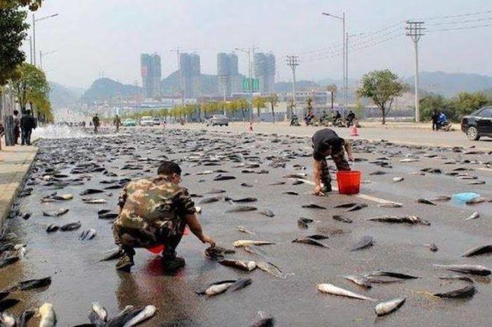 Hujan Ikan Terjadi Setiap Tahun di Honduras