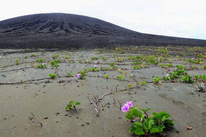 Pulau Hunga Tonga yang terbentuk akibat erupsi gunung berapi.