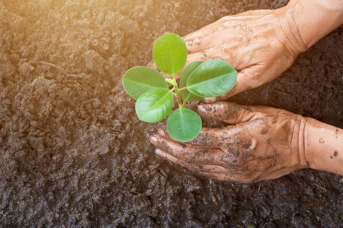 Berkebun dapat membawa dampak positif bagi kesehatan tubuh.