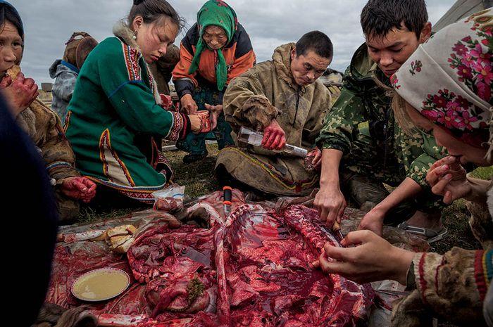 Daging rusa kutub kaya akan mikronutrisi, mineral, dan vitamin, dan menjadi makanan pokok orang Nenet. Ketika mereka menyembelih seekor binatang, mereka memakan dagingnya mentah-mentah, selagi masih hangat. Namun, selama penyebaran wabah anthrax di selatan Yamal pada 2016, mereka menghentikan prakti