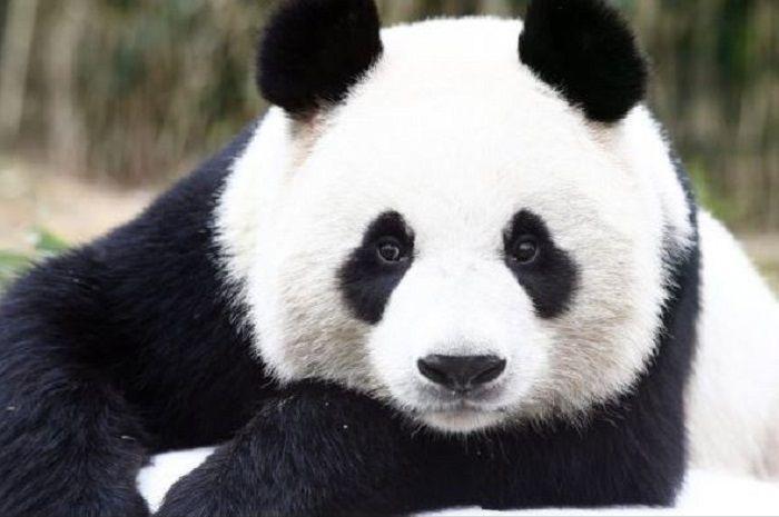 64 Gambar Binatang Lucu Dan Imut HD Terbaru