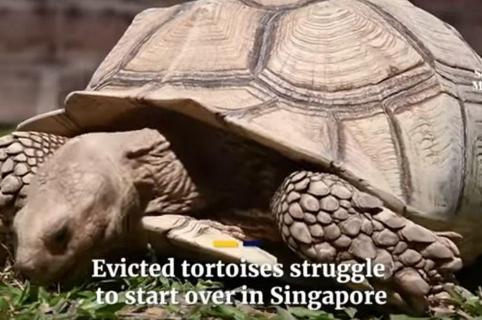 710 Koleksi Gambar Hewan Langka Di Singapura HD Terbaru