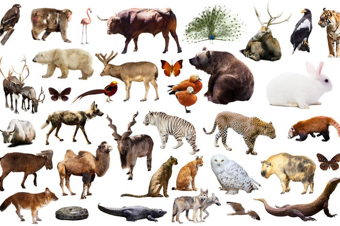 Ilustrasi spesies di Bumi.