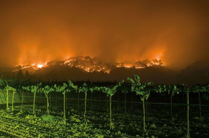Di balik kebun anggur di Napa County, tampak satu dari belasan kebakaran di California Utara selama Oktober 2017. Bertahun-tahun, wilayah itu dilanda kekeringan dan panas ekstrem.