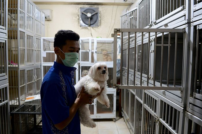 Pekerja merawat anjing yang dititipkan di Glory Petshop, Jakarta Barat, Kamis (30/5/2019). Memasuki libur Lebaran 2019, jasa penitipan hewan mengalami peningkatan permintaan hingga 10 kali lipat bila dibandingkan periode yang sama pada 2018, dengan mematok tarif Rp 90 ribu - Rp 170 ribu per hari ter