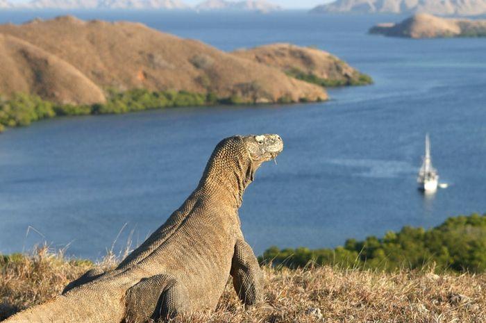 Keindahan Pulau Komodo | Foto: Grid.id