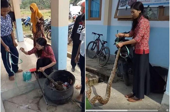 Ibu Guru di Sulbar Taklukan Ular Piton yang Menyusup ke Lingkungan Sekolah, Netizen Takjub