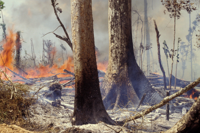 Hutan Amazon terbakar.